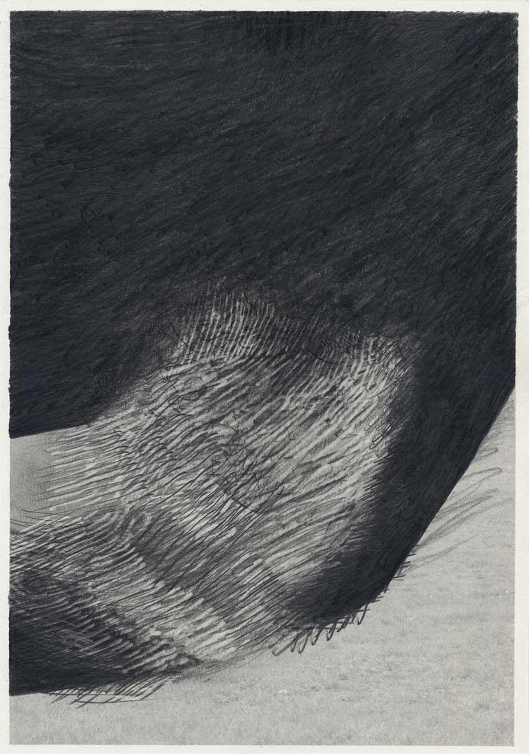 Untitled [Todesstreifen/ Schlesischer Busch] – 29,7 x 21 cm – Graphite drawing on photo-laserprint – 2015 – Inventory # 2015.P.FG.A4.V.0012